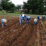 En los terrenos agrícolas ubicados en los viveros El Tequio