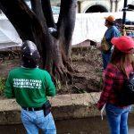 prácticas conjuntas de mantenimiento y atención al arbolado urbano