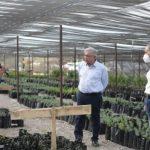 AMLO y JM Carreras supervisan Programa Sembrando Vida en Moctezuma