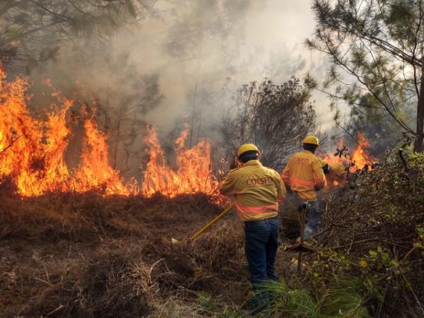 · Se mantienen seis incendios forestales activos en Oaxaca
